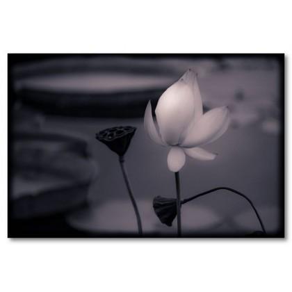 Αφίσα (λουλούδι, πορτοκαλί, μαύρο, λευκό, άσπρο)